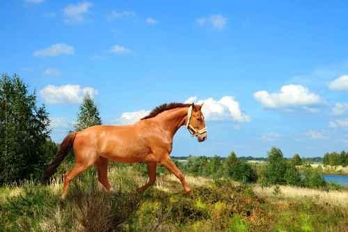 actividad-caballos-niños