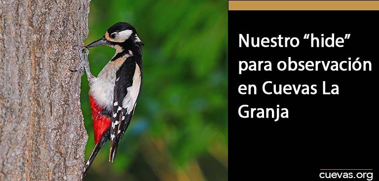 Nuestro-hide-para-observación-de-aves-en-Cuevas-La-Granja
