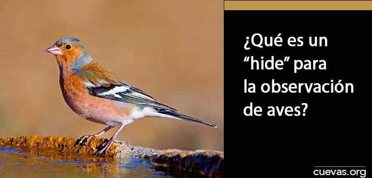 Qué-es-un-hide-para-la-observación-de-aves