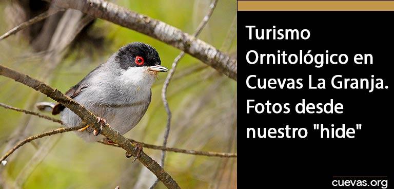 Turismo-Ornitológico-en-Cuevas-La-Granja,-Fotos-desde-Nuestro-hide